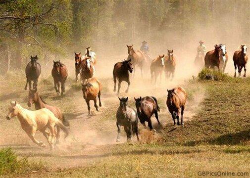 Phần 1 - Chương 24: Ngựa hoang chạy lồng